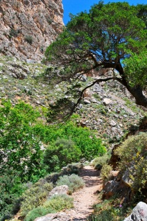 trail under tree at Zakros Gorge Crete
