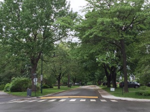 Large green trees frame street and crosswalk