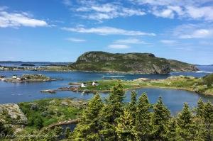 Rocks forest ocean of Salvage Newfoundland