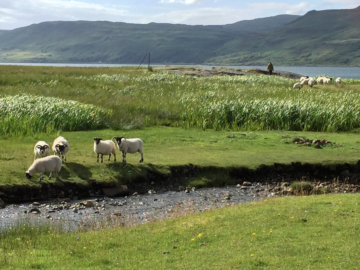 Scotland Cycling Adventure: Isle of Mull